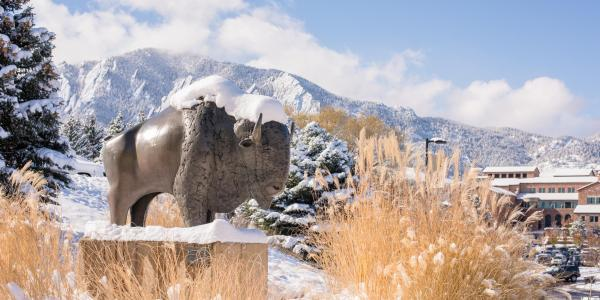 Snow-covered Ralphie statue on campus