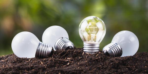 Lightbulbs growing in ground