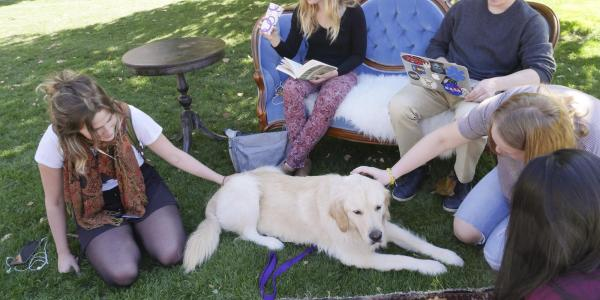 Students visit with therapy dogs during first dog cafe