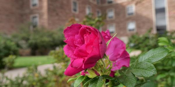 flower blossom outside a residence hall