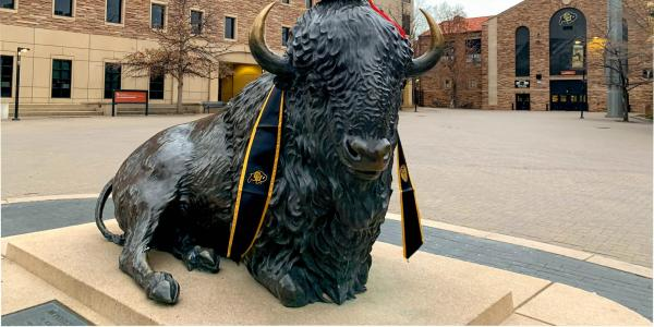 A buffalo statue with graduation regalia.