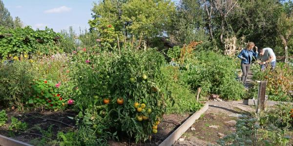 community garden next to Regis University