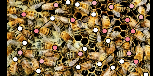 An illustration of bee behavior being modeled by a computer