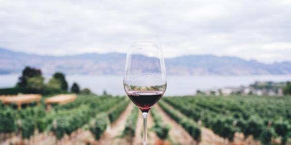 A glass of wine in a vineyard