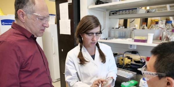 Karl Linden looks at a bacterial culture in his lab.