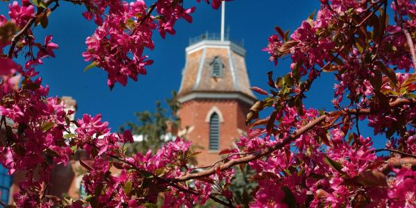 A spring image of Old Main