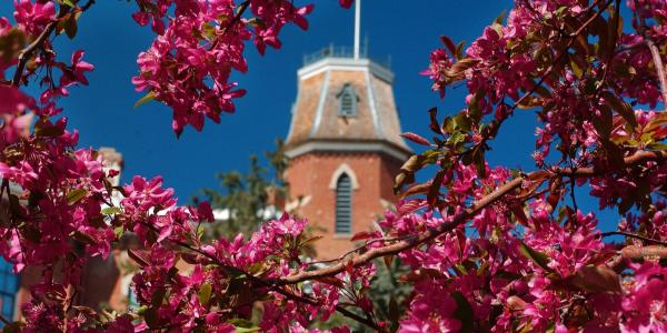 An image of Old Main seen through tree blossoms.