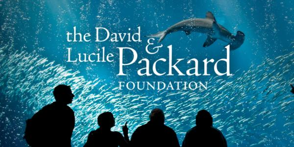 The David & Lucile Packard Foundation; image of onlookers at aquarium with hammerhead shark swimming above