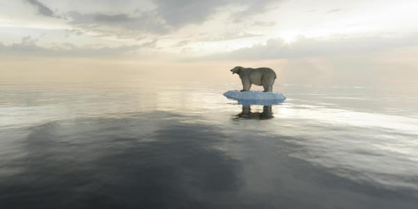 A polar bear on a small patch of sea ice