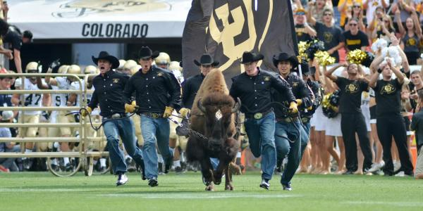 Ralphie running at the 2013 Rocky Mountain Showdown