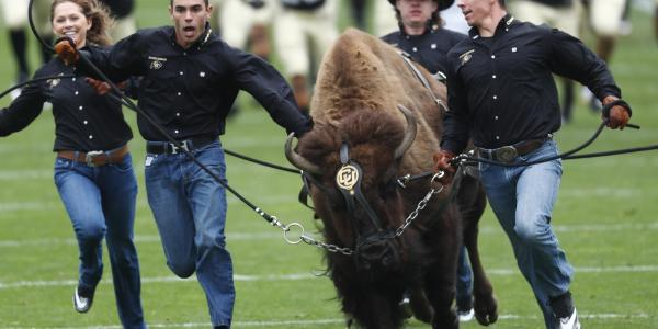 Ralphie and her handlers storming the football field
