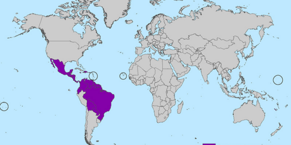 Map highlighting Zika virus-affected areas in Mexico, the Caribbean and Central and South America