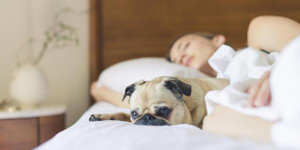 Women sleeping in bed with dog lying next to her awake
