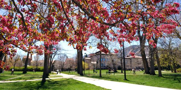 A scenic photo of CU Boulder's campus in the spring