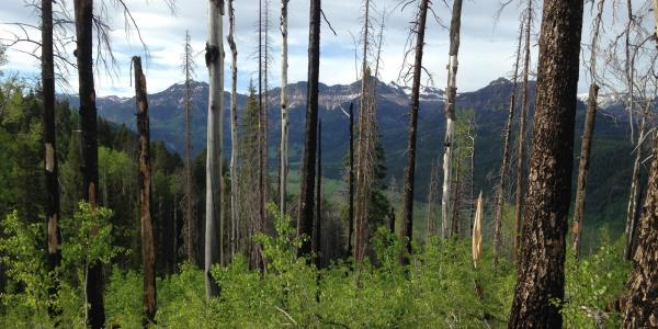 Forest in San Juan mountains