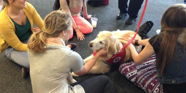 Students visit with therapy dog