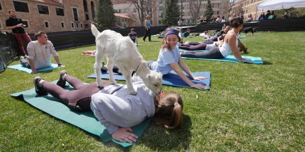 Students enjoy goat yoga on the lawn