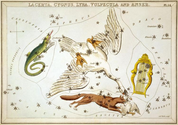Illustration of several constellations, including Lyra, depicted as a golden lyre.
