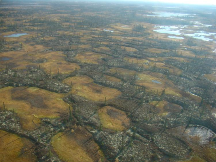 Aerial image of interspersed a permafrost peatland in Innoko National Wildlife Refuge in Alaska interspersed with smaller areas of thermokarst wetlands.
