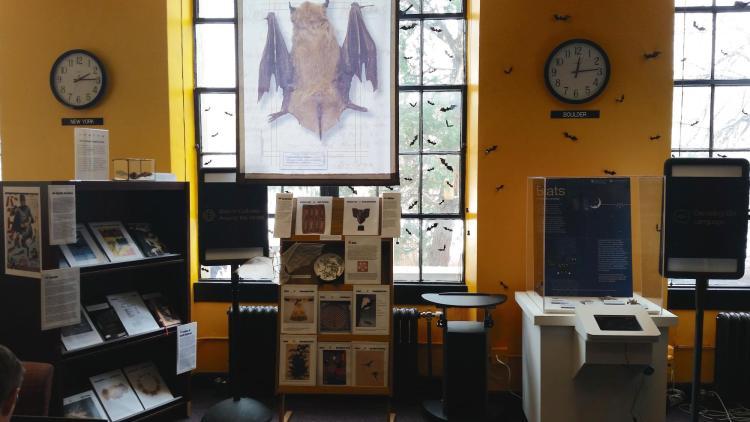 Bats: Language & Cultures exhibit