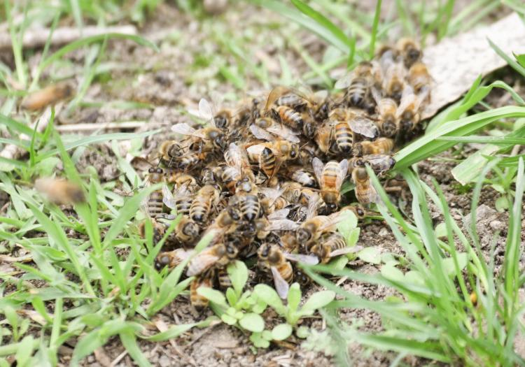 Bees form a small swarm