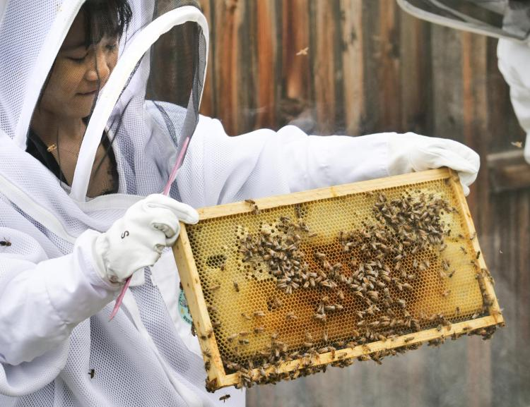 Researcher in beekeeping outfit holds up a bee honeycomb