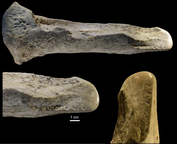 Lissoir, o más suavemente, herramienta de cincel para huesos de Castel di Guido