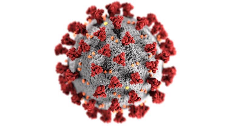 The SARS-CoV-2 virus