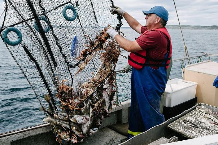 A man pulls up a cod pot from the Atlantic Ocean