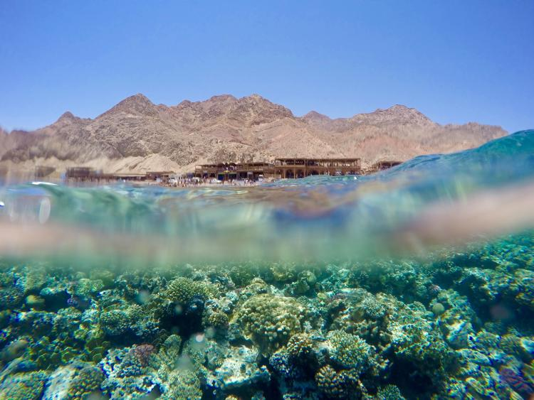 A view of water showing a colorful reef below the surface and small brown mountains and buildings in the distance.