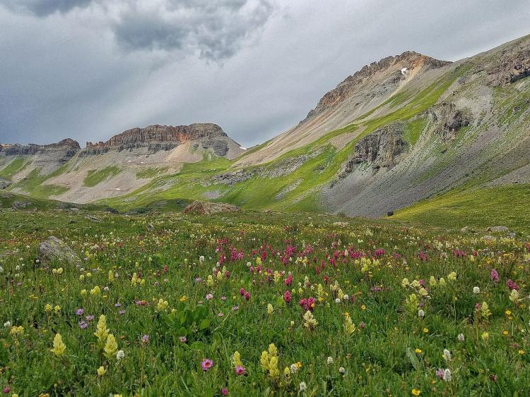 Wildflowers grow in meadow in the San Juan Rocky Mountains