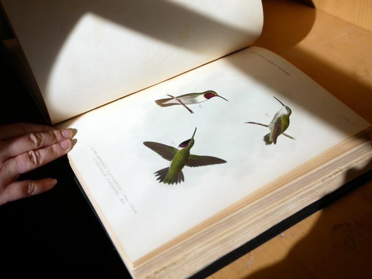 Hand drawn hummingbirds.