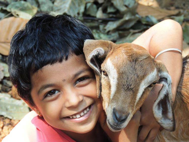 Child hugs goat