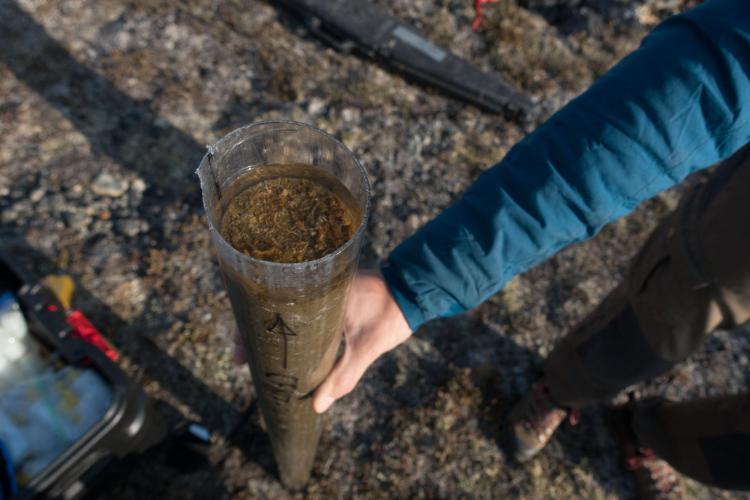 Mud tube