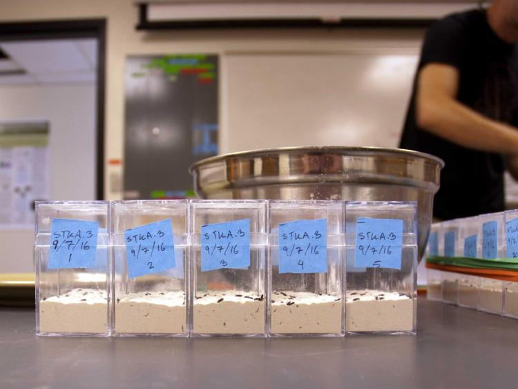 Flour beetle experiment