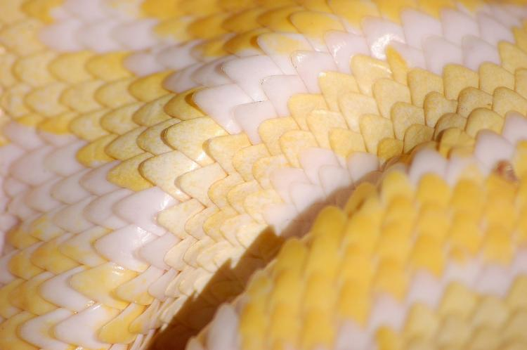 Close up image of snake scales.
