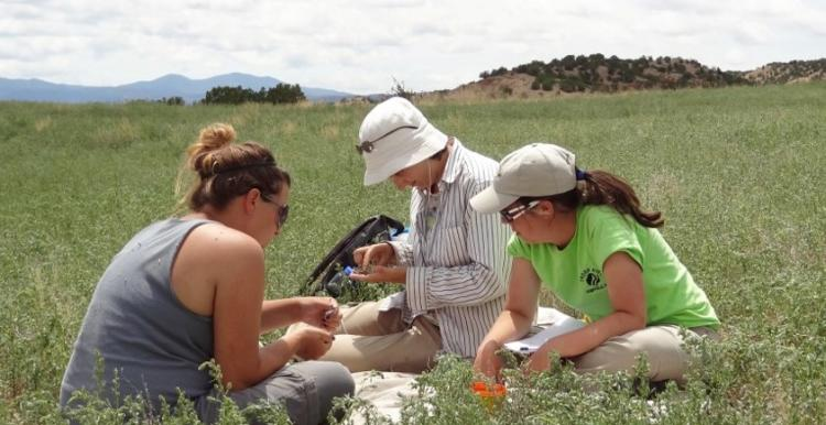 Graduate students sort fragments of pottery at the site of an ancestral Pueblo village.