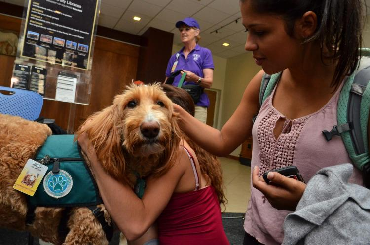 Students gathering to pet therapy dog Scarlett Nohara in Norlin Library