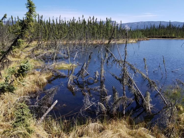 Arctic permafrost thaw plays greater role in climate change than previously estimated - CU Boulder Today