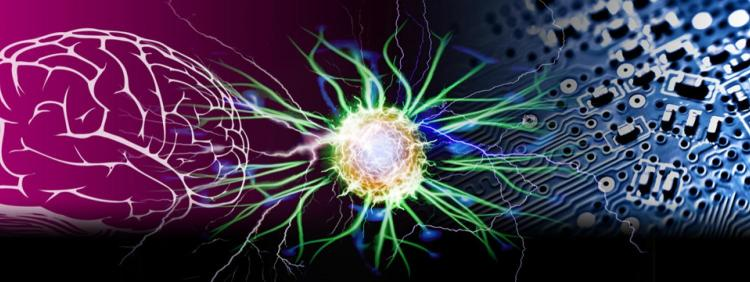 an illustration of neurons in the brain