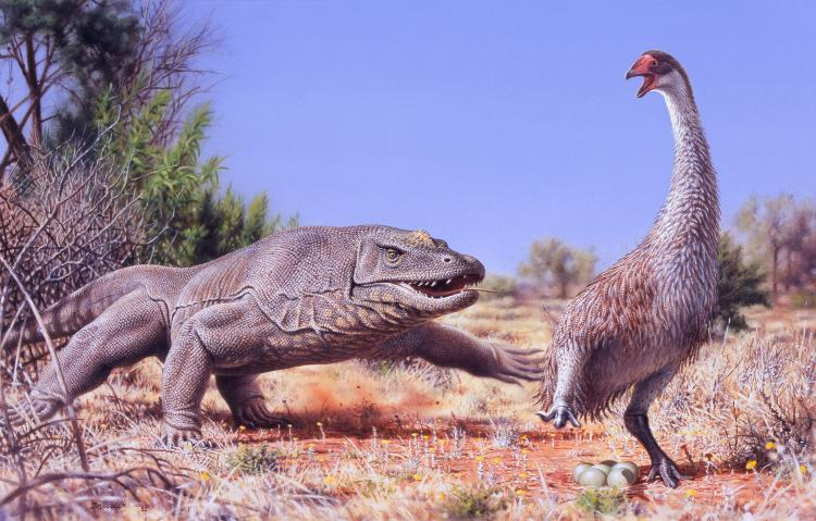 An illustration of the giant, flightless bird known as Genyornis newtoni, surprised on her nest by a 1-ton predatory lizard named Megalania prisca in Australia roughly 50,000 years ago.