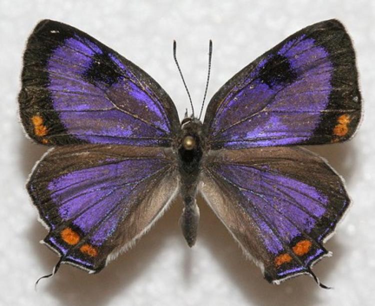 a purple butterfly