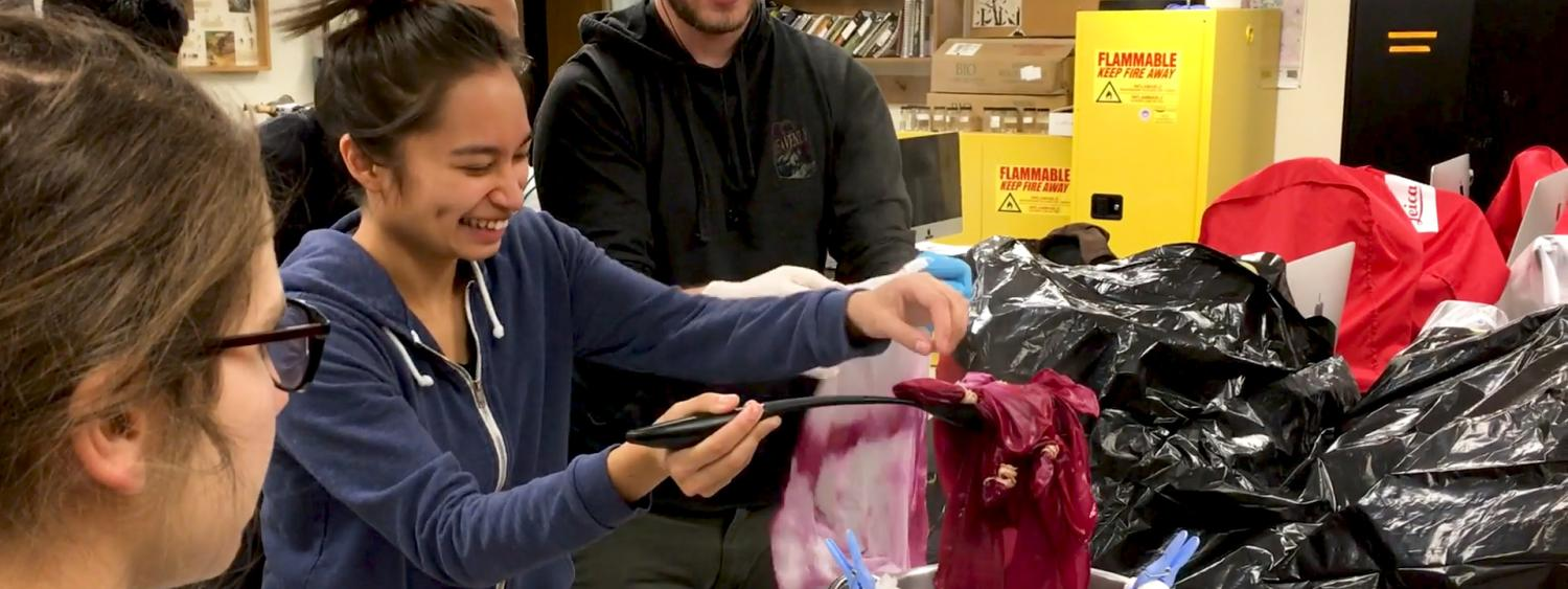 Students dye scarfs using insect-based dyes