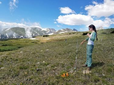 Student Grace Kendziorski measures out a plot on Niwot Ridge