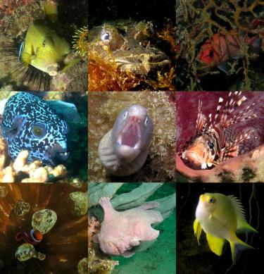 collage of fish tropical fish species
