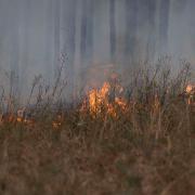 A prescribed fire at the Joseph W. Jones Ecological Research Center in Georgia.