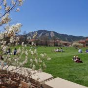 Basking Buffs enjoy the sun and warmth at Farrand Field.