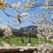 Spring blooms frame a scenic campus setting