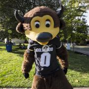 Chip the Buffalo in his Colorado Buffaloes jersey