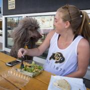 Student Clare Bradley enjoys a lunch outside with her standard poodle Delilah